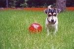 Puppy IV by Heinz Krimmer