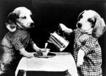 Dogs having a tea party by Anonymous