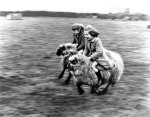 Girls riding on sheep