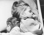 Chimp and girl sleeping by John Drysdale