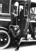 Gorilla and women climb out of the car by Anonymous
