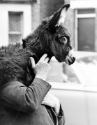 Man with a donkey on his shoulder by John Drysdale