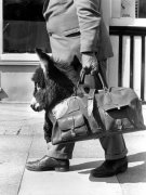 Carrying a donkey in a bag by John Drysdale