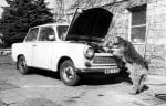 Dog inspecting car engine by Alexander Törker
