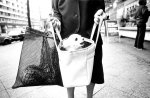 Woman with dog in her shopping bag by David Hornback