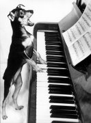 Singing dog plays the piano
