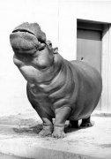 Hippo sniffs the air by Walter Sittig