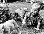 Baby and lion cubs by John Drysdale