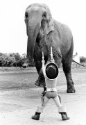 Little cowboy holds up an elephant by John Drysdale