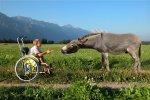 Boy in a wheelchair feeding a donkey by Thomas Hupfauf