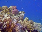 Hard corals, Egypt by Heinz Krimmer