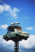 Storks nest in an elevated car by Heinz Krimmer