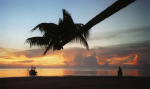 Beach palm tree 2 by Rosseforp