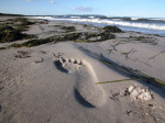 Footprint in the sand by Rosseforp