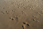 Footprints on the beach by Gerd Pfeiffer