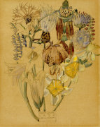 Mont Louis - Flower Study 1925