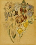 Mont Louis - Flower Study 1925.