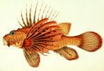 The Most Remarkable and Interesting Fishes Found on the Coast of Ceylon