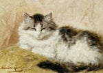 A Cat, 1893 by Henriette Ronner-Knip