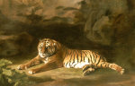 Portrait Of The Royal Tiger Circa 1770