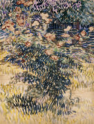 The Rose Bay. The Hospiatl garden At Saint-Remy, 1889 by Vincent Van Gogh