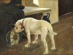 Study Of A Bulldog, 1914 by Arthur Heyer