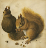 Two Squirrels, One Eating A Hazelnut, 1512 by Albrecht Dürer