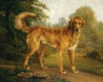 A Golden Retriever On A Path, In Wooded Landscape by Niels Aagaard Lytzen