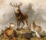 Scene in Braemar - Highland Deer
