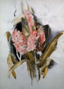 Hyacinth by Charles Henry Demuth