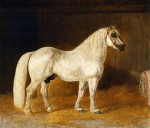 The Percheron Stud 'Diligence' In A Stall by Henri Delattre