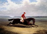 The Baron With Bumpy Up, At Newmarket by John Frederick Herring