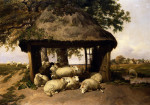 Sheep Resting Under A Shelter by Thomas Sidney Cooper
