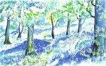Cumbria Bluebell Wood by Luisa Gaye Ayre
