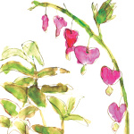 Dicentra by Louise Cunningham