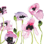 Wild Poppies by Louise Cunningham