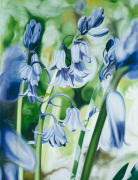 Bluebells by James Knowles