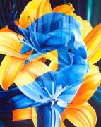 Primavera Cuatro by James Knowles