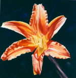 Orange Lily by James Knowles