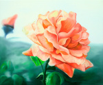 Rose Above by James Knowles