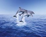 Dolphin Trio by Mini