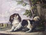 King Charles Spaniel (Restrike Etching) by George Hughes