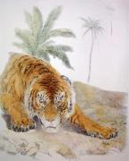 Tiger on the Prowl (Restrike Etching) by Sir Edwin Henry Landseer