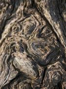 Wood bark close-up by Assaf Frank