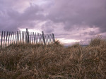 Wooden Fence and Grass, West Wittering beach, UK by Assaf Frank