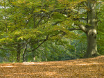 Autumn Trees by Assaf Frank
