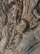 Wood bark close-up by Assaf Frank