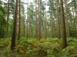 Tree trunks in frorest by Assaf Frank