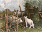 Forgotten Way (Restrike Etching) by William Burton