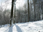 Forest trees with snow by Assaf Frank